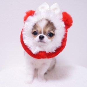 <img class='new_mark_img1' src='https://img.shop-pro.jp/img/new/icons55.gif' style='border:none;display:inline;margin:0px;padding:0px;width:auto;' />クリスマスポンポンスヌード★犬用スヌード★犬用パーティーグッズ'【ドッグウェアならene☆】