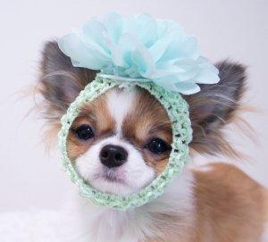 OH!MY HONEY☆お花スヌード★かわいいスヌード★犬用スヌード【ドッグウェアならene☆】
