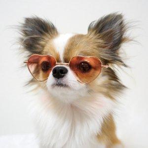ハートサングラス★犬用サングラス【ドッグウェアならene☆】