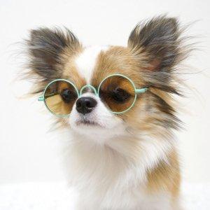 丸サングラス★犬用サングラス【ドッグウェアならene☆】