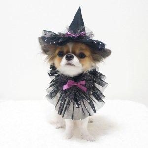 魔女っ子セット★犬用パーティーグッズ★ハロウィン【ドッグウェアならene☆】