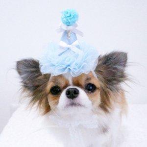 OH!MYHONEY☆パステルパーティーハット★犬用アクセサリー【ドッグウェアならene☆】