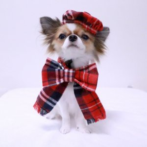 リボンマフラー&ベレー帽セット★リボン★ベレー帽★犬服★【ドッグウェアならene☆】