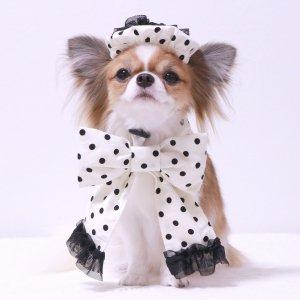 ドットベレー帽&ネックリボンSET★ドット★ベレー帽★リボン★可愛い★【ドッグウェアならene☆】