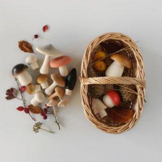 forest wooden  mushroom